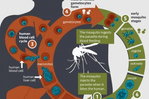 National Institute of Allergy and Infectious Diseases | National Institutes of Health